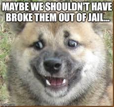 Confused Dog Meme - confused dog memes imgflip