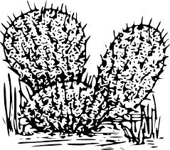 clipart cactus