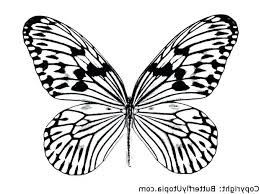 butterflies coloring picture butterfly colouring pages