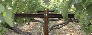 Trellis Wine New Ava Boasts Fine Wine Not Snakes Good Fruit Grower