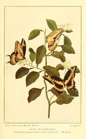 105 best old scientific illustrations insects images on