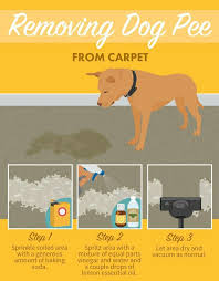 How To Remove Dog Hair From Car Upholstery 58 Best Pet Stuff Images On Pinterest Dog Dogs And Car Seats