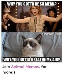 Mean Cat Memes - why you gotta beso mean cat lyrics why you gotta breathe my air