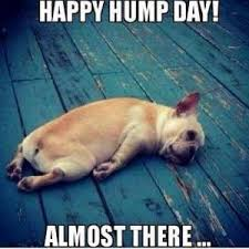 Happy Wednesday Meme - happy wednesday hang in there the tropical tan of