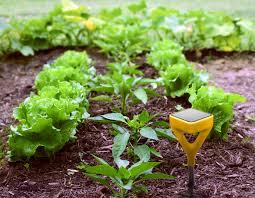 edyn garden sensor modelismo hld com