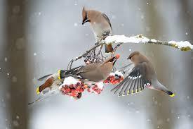 what winter birds eat good winter foods