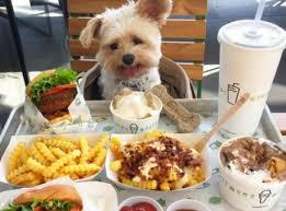 chien cuisine diaporama popeye le petit chien abandonné qui passe sa vie au