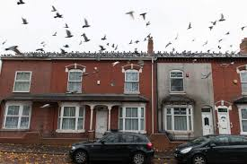 How To Get Rid Of Pigeons On My Roof by Pigeons Take Over Birmingham Street Mirror Online