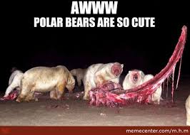 Cutest Memes - polar bears are the cutest by m h m meme center