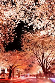 Japanese Cherry Blossom Tree by Japanese Cherry Blossom Pictures Taken With Long Exposure U2013 Cube