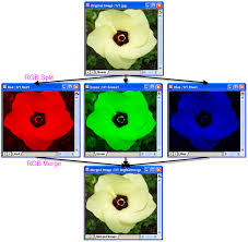 split an color image to its 3 rgb channels matlab answers