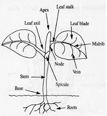 growth and changes in plants u2013 lesson stao blog