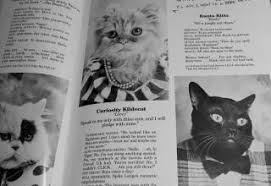 cat yearbook cat high yearbook gallery ebaum s world