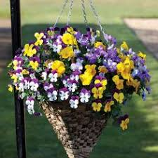 Best Plants For Hanging Baskets by Ready Made Hanging Baskets Plants For Hanging Baskets