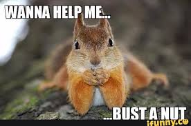 Squirrel Nuts Meme - just a squirrel lookin for a nut album on imgur