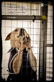 shelter dog u0027s prayer