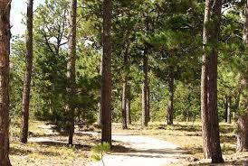 Colorado forest images El paso county colorado black forest regional park jpg