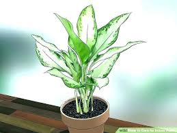best indoor plants for low light large low light indoor plants tall house plants low light best