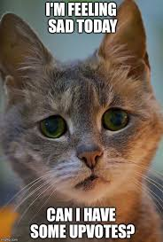 Sad Kitty Meme - sad kitty imgflip