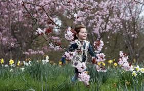 spring blossoms the boston globe