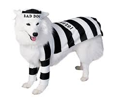 Doggy Halloween Costumes 5 Dog Halloween Costumes