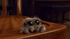 Friendly Spider Memes Image Memes - lucas the spider know your meme