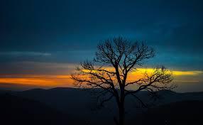 free photo tree mountain sky nature sunset free image on