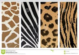a pin board full of prints animal print a images in the