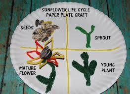 wikki stix sunflower life cycle and crafts for kids wikki stix