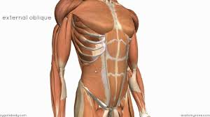Picture Of Abdomen Anatomy Layers Of The Abdominal Wall Youtube