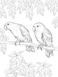 parrots coloring pages eclectus parrot coloring page free printable coloring pages