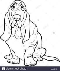basset hound dog cartoon coloring book stock vector art
