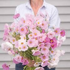 jim u0027s favorite flower garden seeds