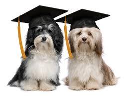 dog graduation cap dog graduation cap search on we heart it