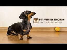 floor for dogs pet flooring best floor for dogs