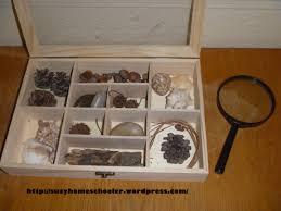 montessori inspired nature table suzy homeschooler