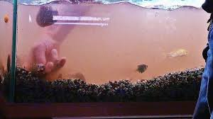 How To Clean Fish Tank Decorations How To Clean A Fish Tank Do It In Easy Steps U2022 Mommy U0027s Memorandum