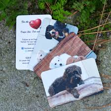 pet business cards creative ideas and best practice pet sitting