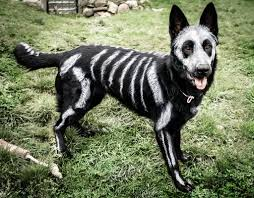 animals halloween animals transformed into creepy skeletons for halloween