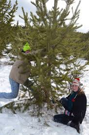 Cutting Christmas Tree - the family christmas countdown december 8th cutting the