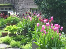 riverbanks botanical garden the last of the tulips nant y bedd