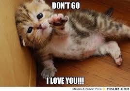 But I Love You Meme - 20 totally irresistible love you memes sayingimages com