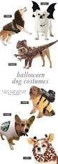 6 dog halloween costume ideas for you u0026 your pooch pretty fluffy