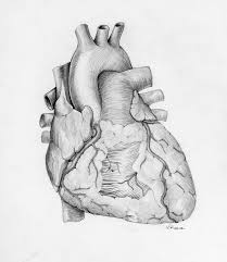 anatomical heart anatomical heart tattoo inspired by medical