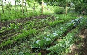 outdoor french intensive gardening wearefound home design