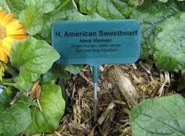 Vegetable Garden Labels by 58 Best Greenhouse Wishlist Images On Pinterest Greenhouses