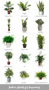 Good Inside Plants | best plants for inside plants ideas