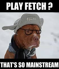 Hipster Dog Meme - tasha meyering hipster dog meme slapcaption com jc pinterest