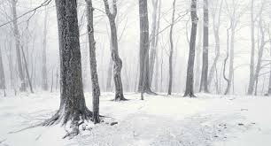 wallpaper tumblr forest winter forest wallpaper tumblr wallpapers background