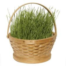 easter basket grass the original all grow your own easter grass kit